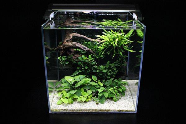 Trend Nano Aquascape Di Tengah Kaum Urban Binus University Bandung Kampus Teknologi Kreatif